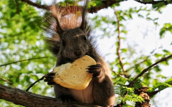 animal awesome squirrel cute eating cookie cookies ardilla