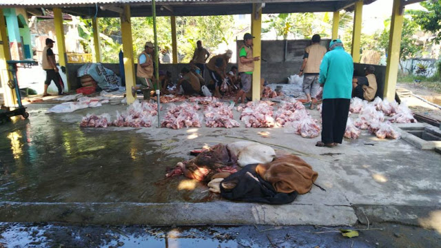 panitia kurban selesai melakukan penyembelihan hewan kurban