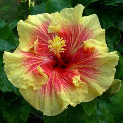 manfaat di dalam keindahan bunga