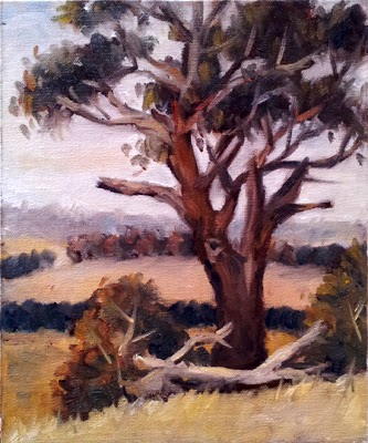 Oil painting of a manna gum with a fallen branch in front and distant rolling hills.