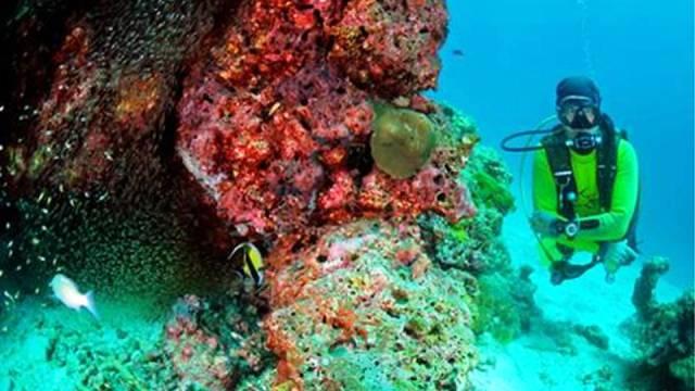 ท่องเที่ยว, แนวหินปะการัง, มัลดีฟส์, สถานที่ดำน้ำ, สถานดำน้ำทั่วโลก, อันดับสถานที่ดำน้ำ, ภูเก็ต ประเทศไทย (Phuket, Thailand)