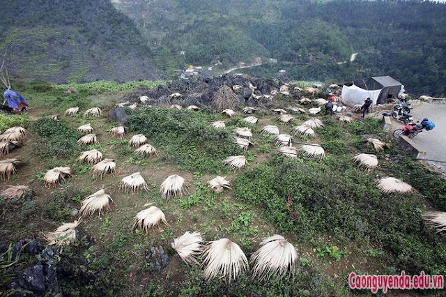 Trang trại nuôi ong trên cao nguyên đá Hà Giang