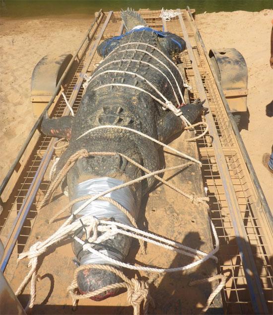 Crocodilo gigante Australia - Img 2