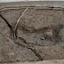 Descubren en Chile lo que sería la huella humana más antigua en América