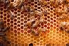 Έρευνες για το Ελληνικό Μέλι αποδεικνύουν τι έχουμε στα χέρια μας: Απίστευτες αποκαλύψεις...