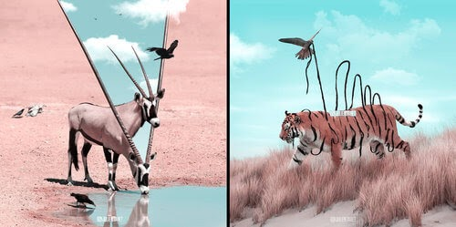 00-Julien-Tabet-Surreal-Animal-Photo-Manipulation-www-designstack-co