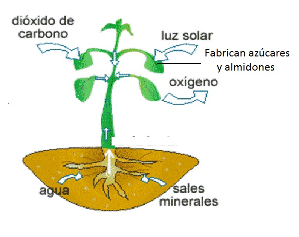 Respiracion De Las Plantas Gif: Ciencias Naturales CEUJA 2015: Agosto 2015