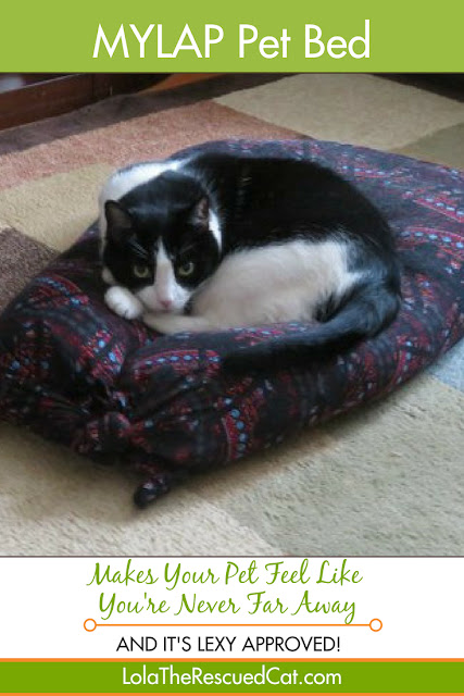 mylap pet bed|best pet beds