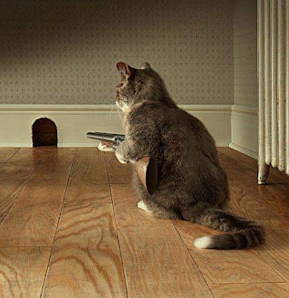 Dog And Cat Film