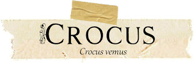Magical and Medicinal Uses of Crocus. Includes FREE BOS page!