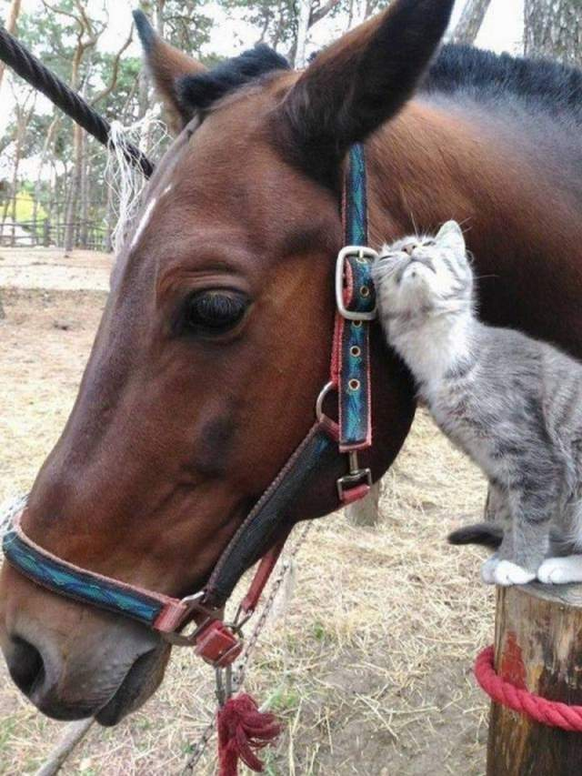 Funny animals of the week - 30 November 2018, adorable animals, animal photos, animal picture