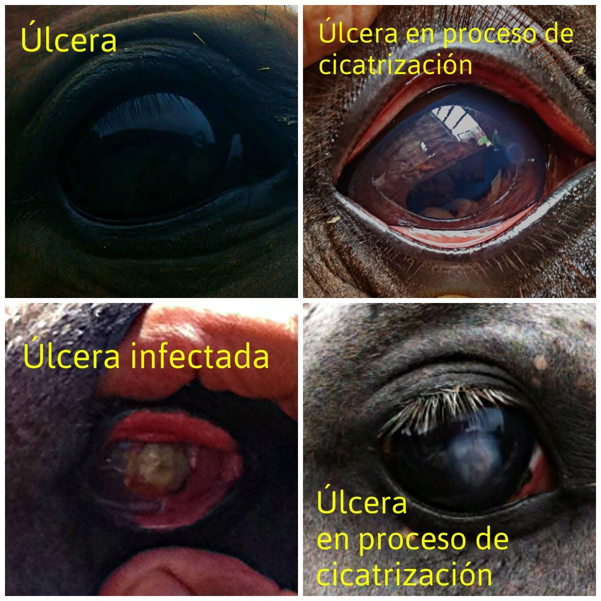 El OJO Y LA VISIÓN DEL CABALLO | Sabino A. Arias, Médico Veterinario ...