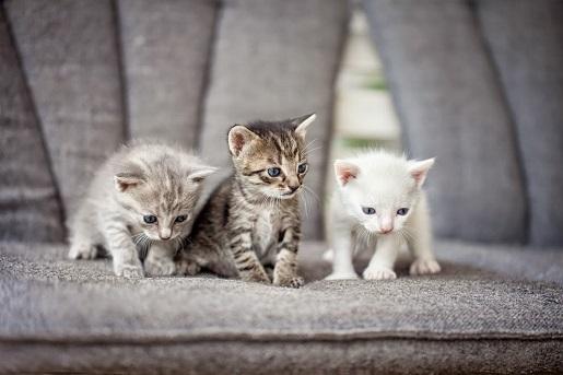 Opieka nad kociętami