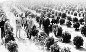 """Torazo Okamoto para trazer as sementes de chá ele escondeu dentro do miolo de pão, para """"driblar"""" a fiscalização do navio na viagem que ele fez do Japão para o Brasil (1935)."""