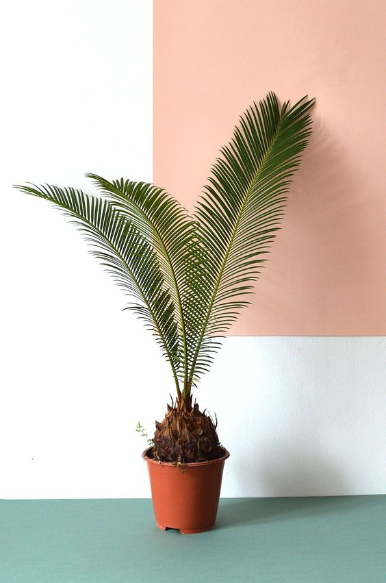 AtelJ: Tropische interieuren