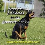 Signo de problemas en las glandulas anales