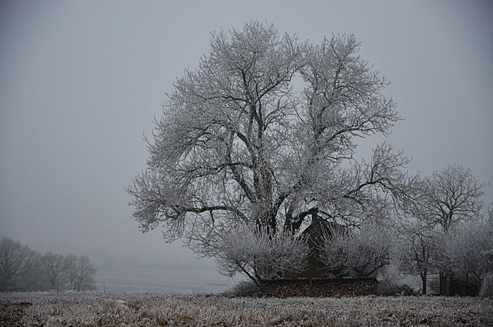 arbre dans un champ
