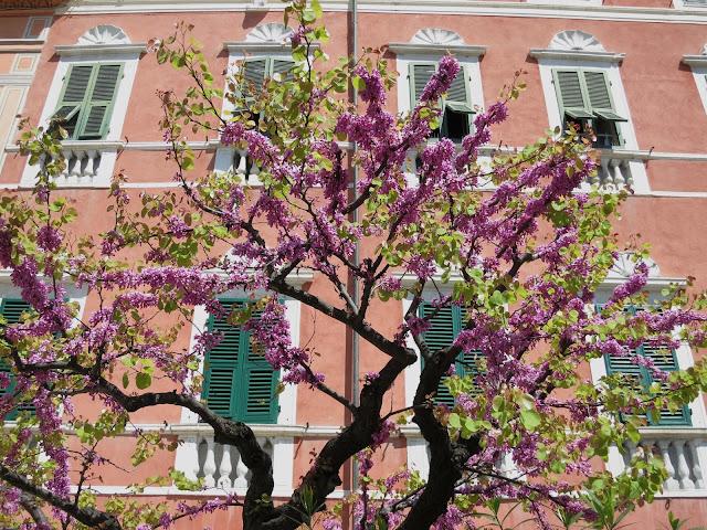 Spring blossoms near Cinque Terre, Lerici, Liguria