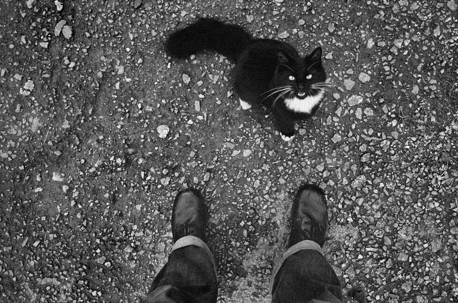 The Cat Ladies  Josef Koudelka