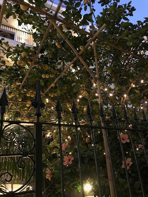 Sorrento travel time - lemon trees