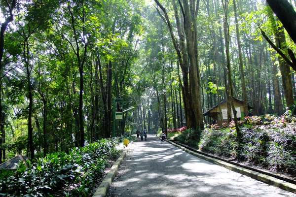 Hutan Kota Jombang