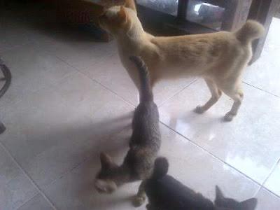 30 Penyebab dan Alasan Orang Tidak Menyukai Kucing dan Memilih Tidak Memelihara Kucing