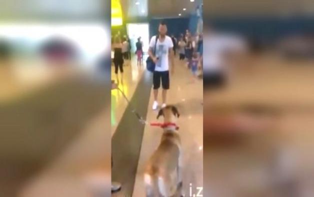 Δεν είχε δει τον Σκύλο του για 3 χρόνια! ΔΕΙΤΕ την στιγμή που τον ξανασυναντά…