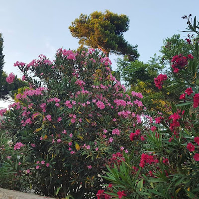 Provence Petits Bonheurs Count Your Blessings Little Things Pensée positive Positive Thinking Gratitude Journal