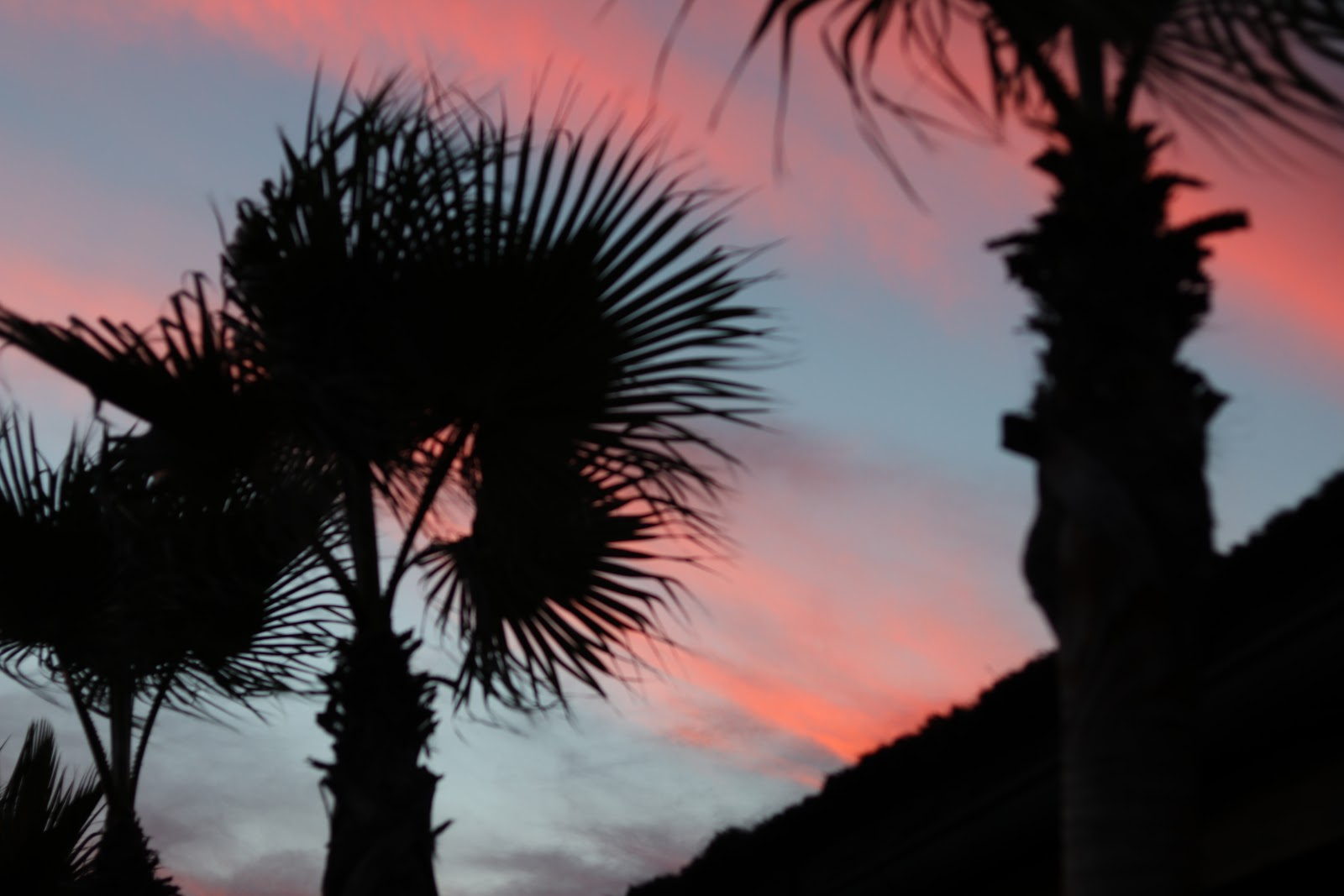 Sunset against Palm Trees at Trocadero in Sotogrande, Spain