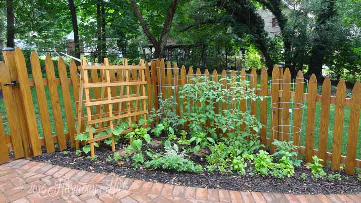 2016 Vegetable Patch