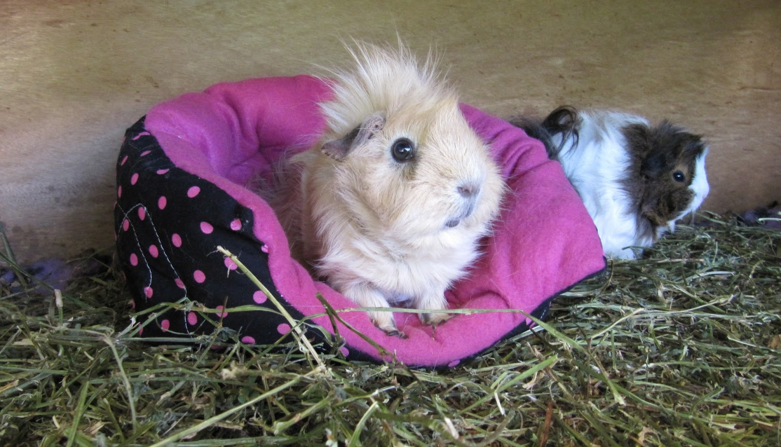 All Things Guinea Pig Cuddle Sacks
