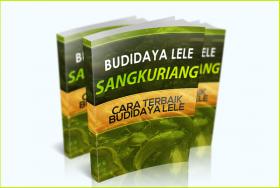 Budidaya Lele Sangkuriang