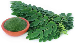 khasiat daun kelor untuk diabetes