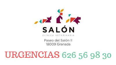Urgencia Veterinaria Granada Clínica Salón