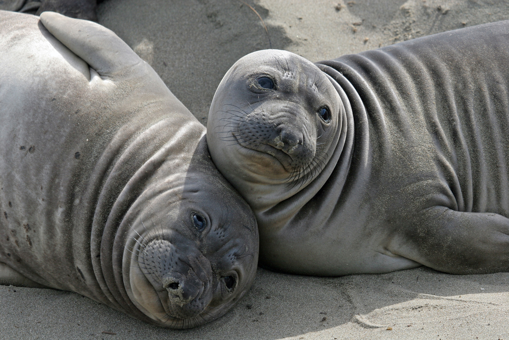 The Wire Quotes Wallpaper Elephant Seals San Simeon Online News Icon