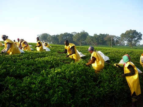 Pictures of Labor Intensive Agriculture - #rock-cafe