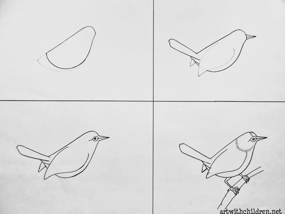 Drawing A Common Tailor Bird
