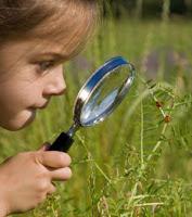 Kecerdasan Naturalis (Naturalist Intelligence)