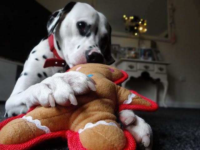Webbox Dog