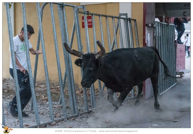 Corsa camarghese toro esce dall'arena