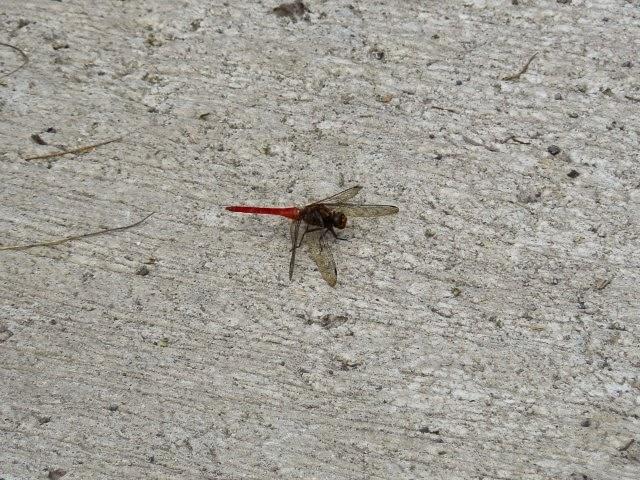 insectos en ubud