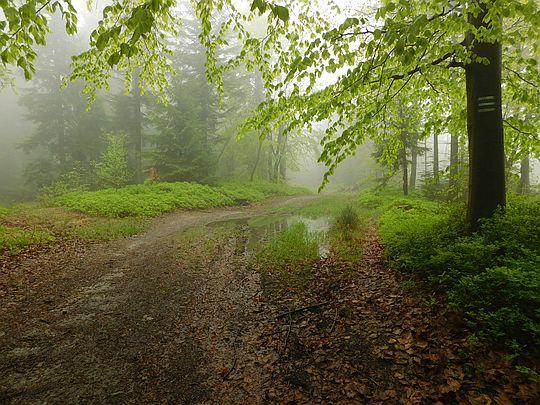 Schodzimy do wsi Ślemień.