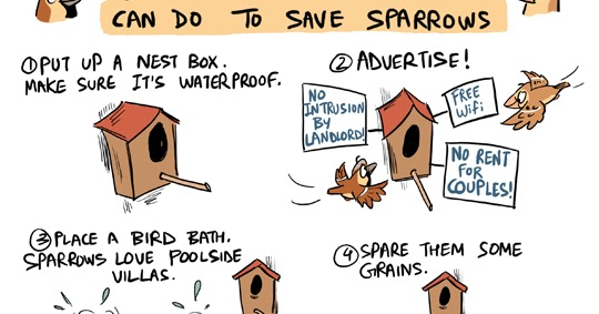 Green Humour Little Things You And I Can Do To Save Sparrows