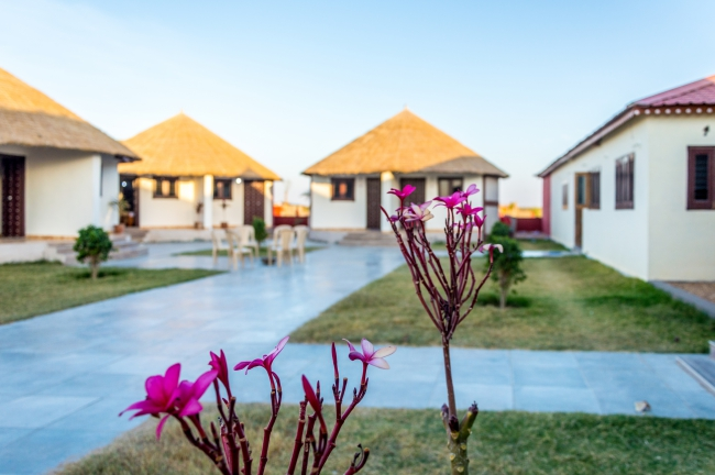 Flowers at Ran Resorts - Dholavira