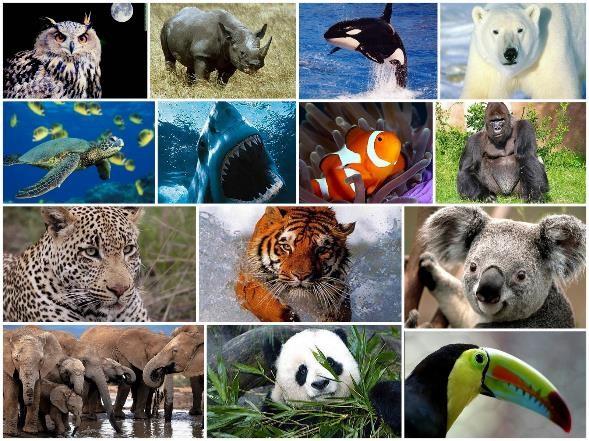 Animales y Especies en Peligro de Extinción