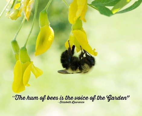 National Pollinator Week Quote