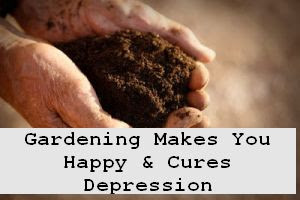 https://foreverhealthy.blogspot.com/2012/05/why-gardening-makes-you-happy-and-cures.html#more