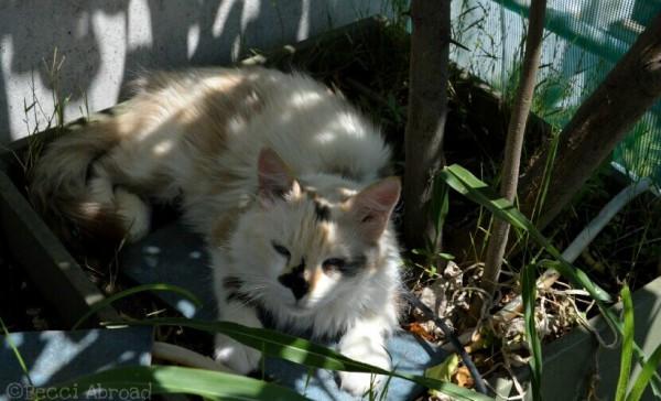 cats sleeping plants