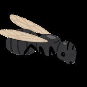 羽アリのイラスト