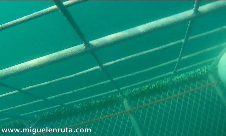 Fondo-jaula-tiburones